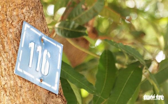 TP Vinh thay hơn 300 cây xanh làm phố đi bộ, dân tiếc nuối - Ảnh 4.