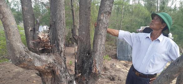 Dừng dự án điện gió chậm tiến độ 8 năm, để mất 140ha rừng - Ảnh 2.
