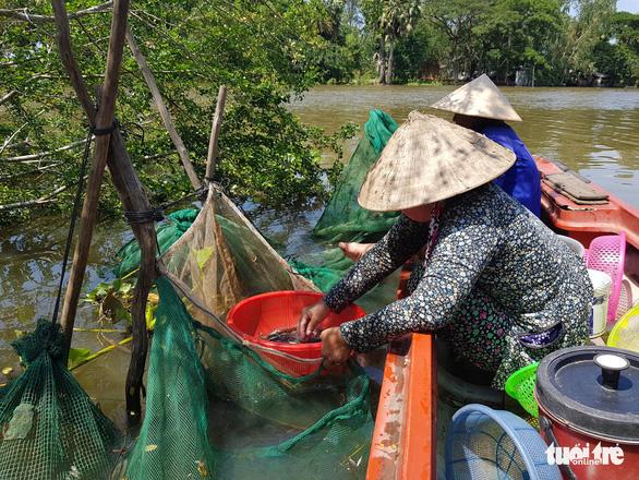 Lũ về trễ lại rút nhanh, giá cá linh còn khoảng 50.000 đồng/kg - Ảnh 3.