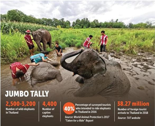Góc tối đáng sợ của các trại voi mọc như nấm ở Thái Lan - Ảnh 1.