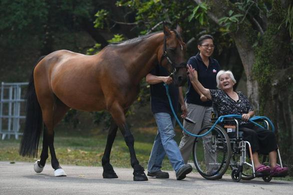 Dùng ngựa chữa bệnh, dân Singapore đang thích - Ảnh 1.