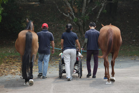Dùng ngựa chữa bệnh, dân Singapore đang thích - Ảnh 3.