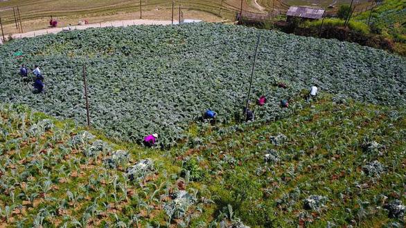 Những vùng đất trồng dược liệu đạt chuẩn thế giới ngay tại Việt Nam - Ảnh 1.