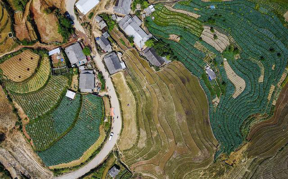 Những vùng đất trồng dược liệu đạt chuẩn thế giới ngay tại Việt Nam - Ảnh 2.