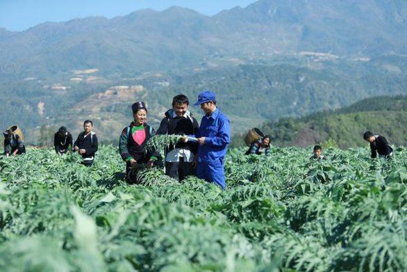 Những vùng đất trồng dược liệu đạt chuẩn thế giới ngay tại Việt Nam - Ảnh 3.