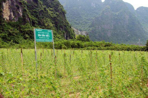 Những vùng đất trồng dược liệu đạt chuẩn thế giới ngay tại Việt Nam - Ảnh 4.