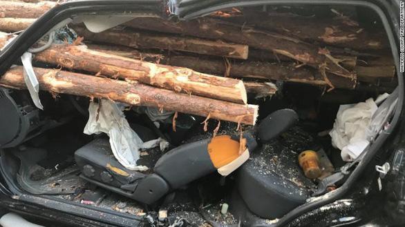 Thoát chết hi hữu khi hàng chục cây gỗ đâm xuyên ôtô - Ảnh 1.