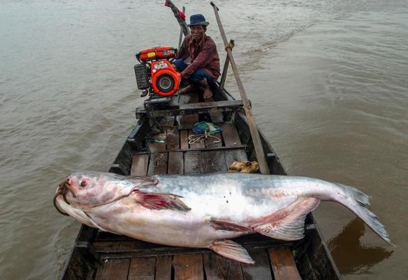 Trung Quốc đang kiểm soát gần 1/5 lưu lượng sông Mekong - Ảnh 2.
