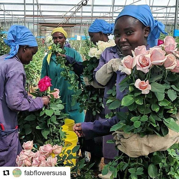 Châu Phi thách thức vị trí số 1 của Hà Lan trong ngành hoa tươi - Ảnh 5.