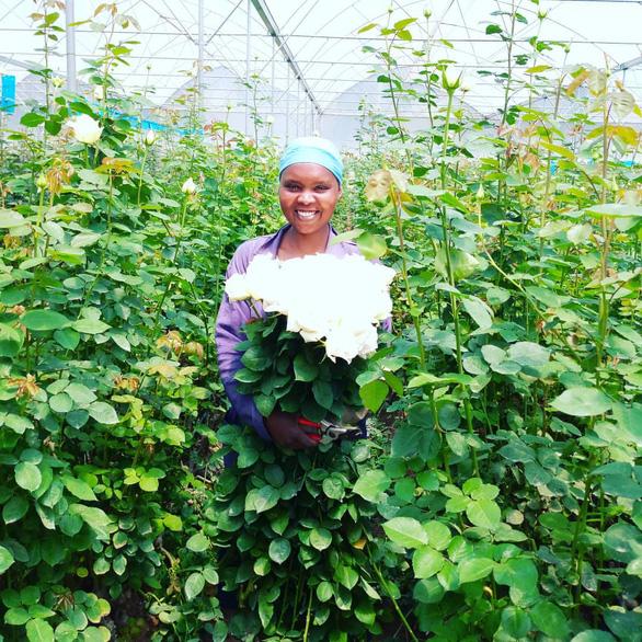 Châu Phi thách thức vị trí số 1 của Hà Lan trong ngành hoa tươi - Ảnh 4.