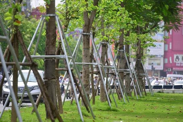 Hà Nội xin trồng thêm 600.000 cây xanh không qua đấu thầu - Ảnh 2.