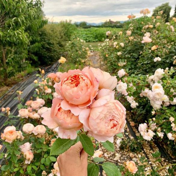 Châu Phi thách thức vị trí số 1 của Hà Lan trong ngành hoa tươi - Ảnh 7.