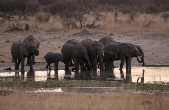 Đau lòng 55 con voi chết thảm vì đói khát, bị kền kền rỉa xác - Ảnh 2.