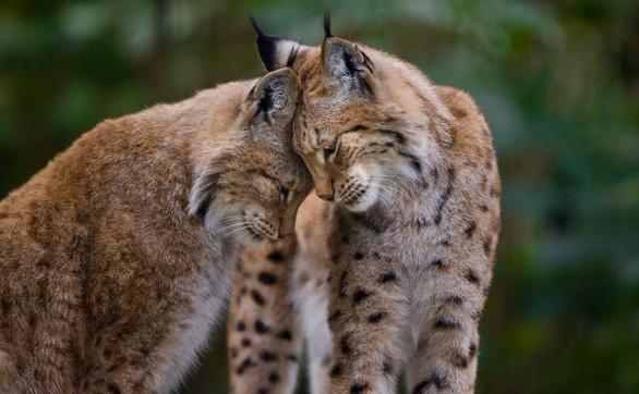 Động vật hôn nhau bày tỏ yêu thương ngọt ngào hơn cả người - Ảnh 9.