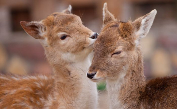 Động vật hôn nhau bày tỏ yêu thương ngọt ngào hơn cả người - Ảnh 14.