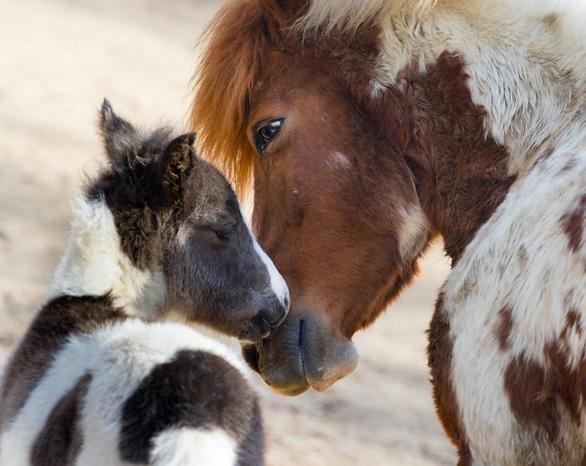 Động vật hôn nhau bày tỏ yêu thương ngọt ngào hơn cả người - Ảnh 17.