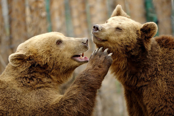 Động vật hôn nhau bày tỏ yêu thương ngọt ngào hơn cả người - Ảnh 4.