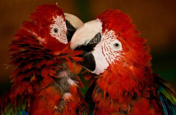 Động vật hôn nhau bày tỏ yêu thương ngọt ngào hơn cả người - Ảnh 7.