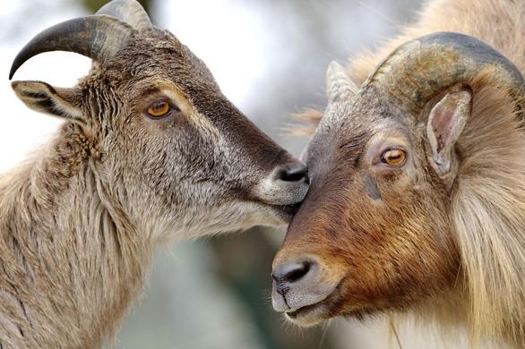 Động vật hôn nhau bày tỏ yêu thương ngọt ngào hơn cả người - Ảnh 8.