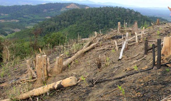 Khởi tố trưởng Ban quản lý rừng phòng hộ vì để đơn vị quân đội phá rừng, trồng cao su - Ảnh 1.