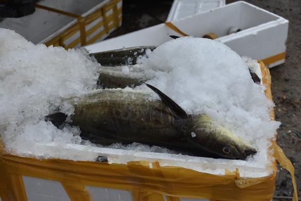 Người nuôi thủy sản trên vịnh Vân Phong hối hả bán cá chạy bão số 5 - Ảnh 9.