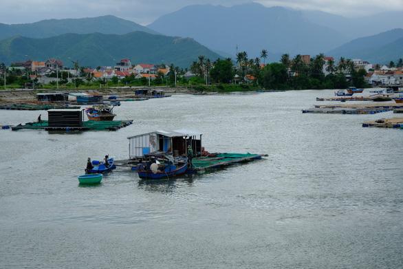 Người nuôi thủy sản trên vịnh Vân Phong hối hả bán cá chạy bão số 5 - Ảnh 7.