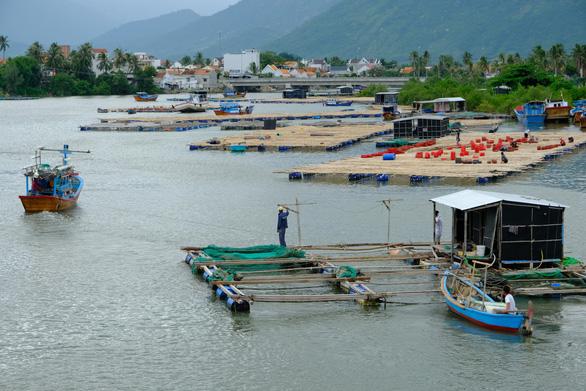 Người nuôi thủy sản trên vịnh Vân Phong hối hả bán cá chạy bão số 5 - Ảnh 1.
