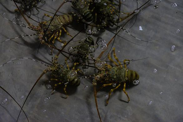 Người nuôi thủy sản trên vịnh Vân Phong hối hả bán cá chạy bão số 5 - Ảnh 6.