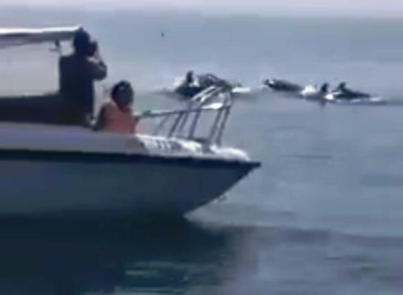 Đàn cá heo hàng chục con vờn sóng ngoài biển Hội An - Ảnh 2.
