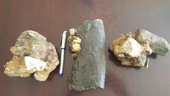 Tìm thấy hóa thạch loài tê giác trong hang động ở Phong Nha - Kẻ Bàng - Ảnh 1.