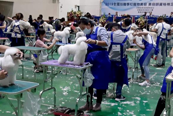 Cô gái Việt giỏi cắt tỉa làm đẹp cún cưng chinh phục giám khảo Đài Loan - Ảnh 3.