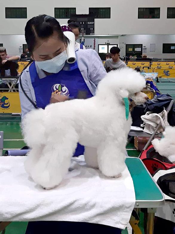 Cô gái Việt giỏi cắt tỉa làm đẹp cún cưng chinh phục giám khảo Đài Loan - Ảnh 4.