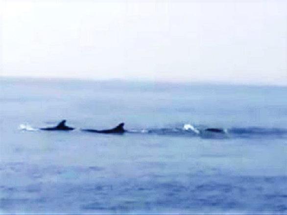 Đàn cá heo xuất hiện ở biển Hội An: Môi trường và hệ sinh thái biển tốt - Ảnh 3.
