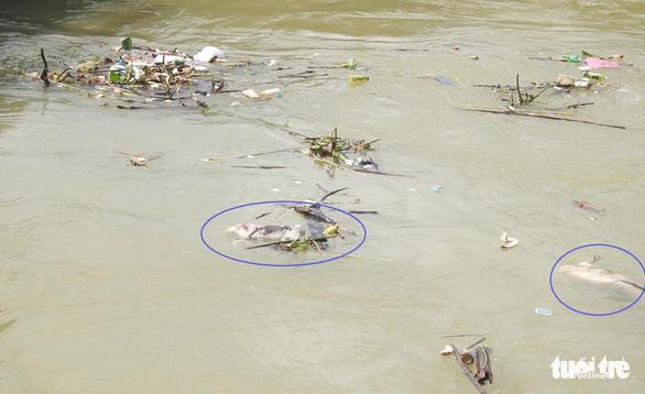 Nghệ An: Dân vứt heo chết trôi đầy sông, bất chấp dịch lan khắp nơi - Ảnh 3.