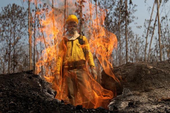 Thủ phạm hủy diệt sự sống - Kỳ 1: Rừng tàn theo ngọn lửa - Ảnh 1.