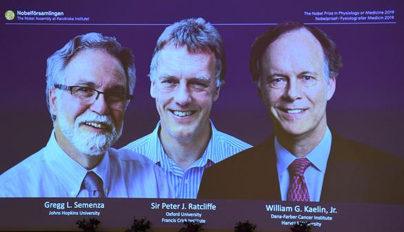 Nobel Y Sinh 2019 vinh danh khám phá về tế bào - Ảnh 1.