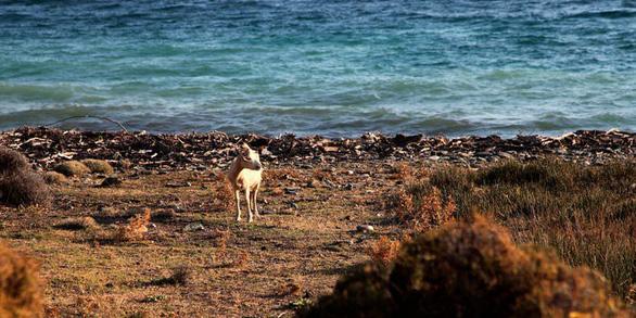 Hòn đảo Hi Lạp khủng hoảng vì quá nhiều… dê - Ảnh 5.