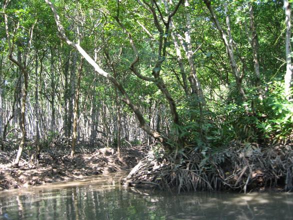 Phát động cuộc thi vẽ với chủ đề rừng ngập mặn bảo vệ cuộc sống - Ảnh 1.