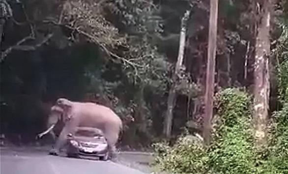 Voi đè suýt bẹp xe hơi khiến du khách khiếp vía - Ảnh 2.