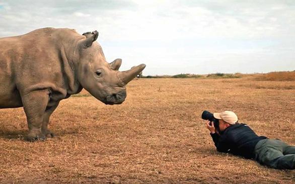 Thu thập móng tay người thay cho sừng tê giác - Ảnh 1.