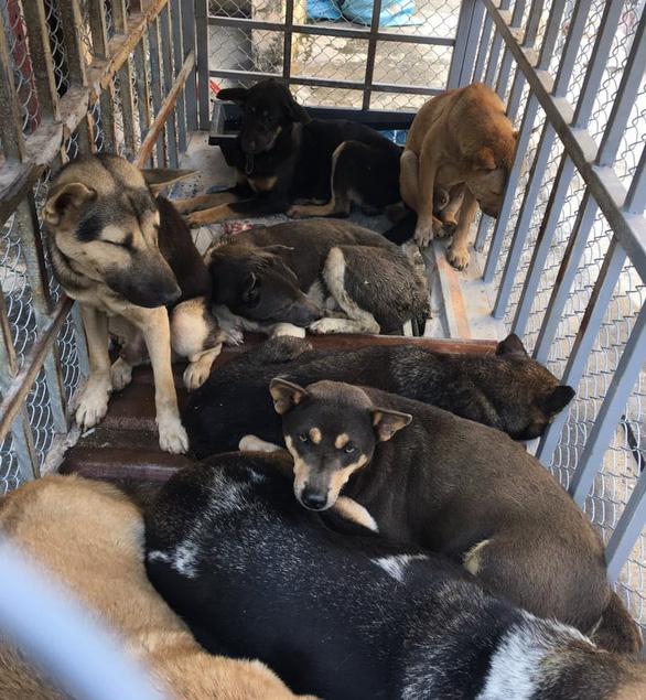 Bắt băng trộm chó Thanh Hóa mỗi đêm câu hơn chục con - Ảnh 2.