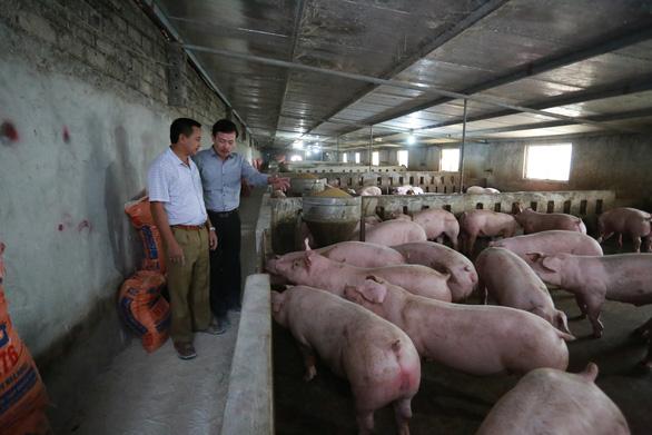 Giá thịt heo hơi xuất chuồng lập kỷ lục: 76.000 đồng/kg - Ảnh 3.