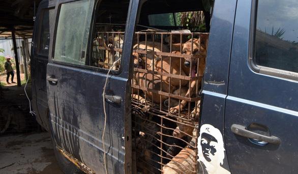 Dân Campuchia vừa mổ chó vừa van nài: Xin hãy tha thứ cho tao! - Ảnh 3.