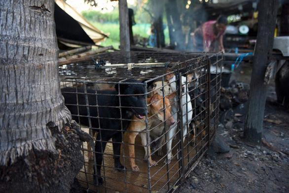 Dân Campuchia vừa mổ chó vừa van nài: Xin hãy tha thứ cho tao! - Ảnh 1.