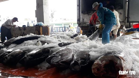 Hàng trăm tấn cá ồ ạt cập cảng Quy Nhơn sau bão số 6 - Ảnh 6.