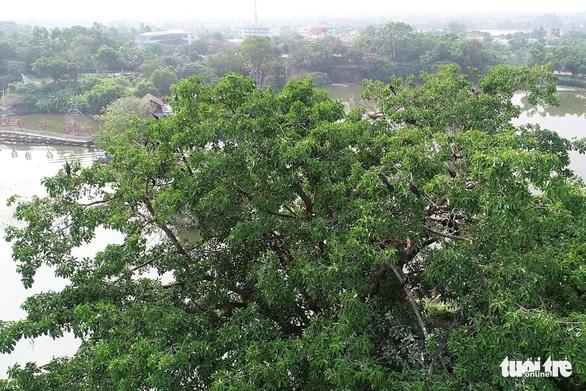 Phát hiện hàng trăm con chim cổ rắn quý hiếm tại khu du lịch Bửu Long - Ảnh 2.