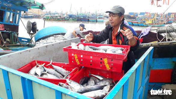 Hàng trăm tấn cá ồ ạt cập cảng Quy Nhơn sau bão số 6 - Ảnh 4.