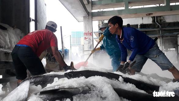 Hàng trăm tấn cá ồ ạt cập cảng Quy Nhơn sau bão số 6 - Ảnh 7.