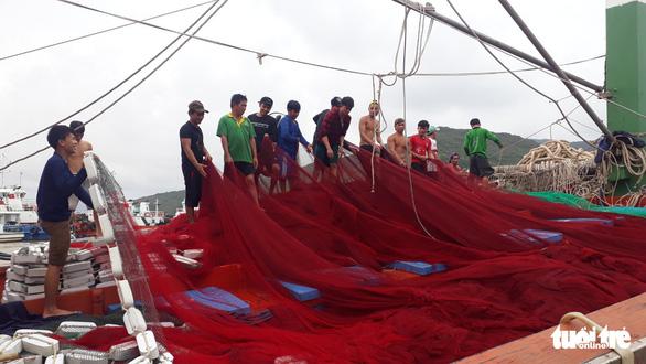 Hàng trăm tấn cá ồ ạt cập cảng Quy Nhơn sau bão số 6 - Ảnh 9.