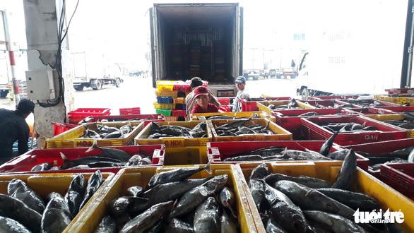 Hàng trăm tấn cá ồ ạt cập cảng Quy Nhơn sau bão số 6 - Ảnh 5.